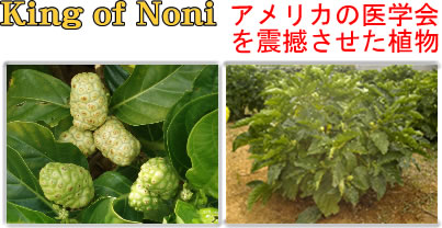 King of Noni