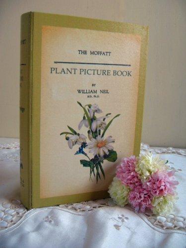 ティアラ 古い本の箱 秘密の引き出しの商品写真7