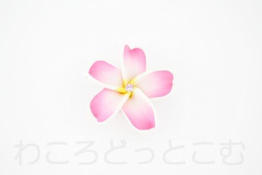 ハワイ限定 クロックス ジビッツ プルメリア(CROCS jibbitz Plumeria) 送料無料!
