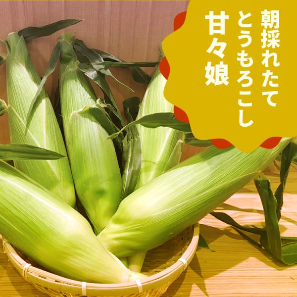 【送料込】 静岡森町 朝採りとうもろこし「甘太郎(約1.5� 5本)と2種から選ぶお茶セット」  [2]