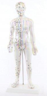 格安/手刻「鍼・灸・経穴人形」 女性用 68cm