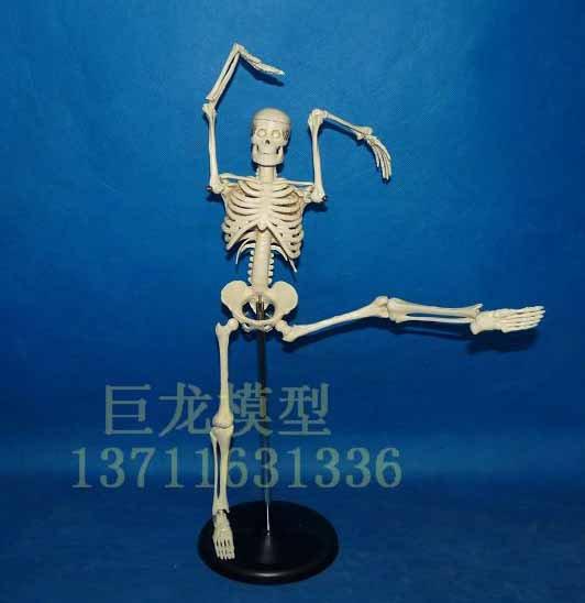 人体骨格模型 45cm