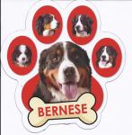 Berner Paw w/Bone - Magnet