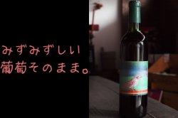 動物ラベル赤ワイン キャンベル・アーリー
