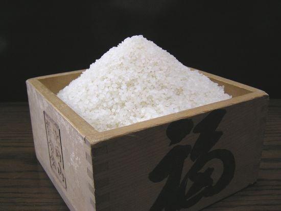 コシヒカリ(特別栽培米)5kg