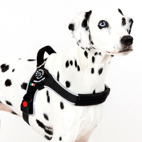 Brio(中型犬・大型犬用ハーネス)