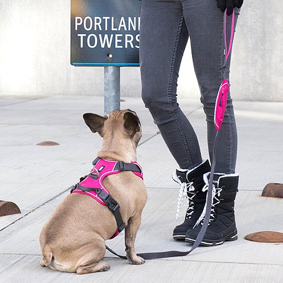 Urban Trail Harness(小型-大型犬用ハーネス)
