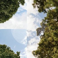 Field Works / Maples, Ash, and Oaks: Cedars Instrumentals