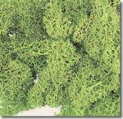 アイスランドモス スプリンググリーン(黄緑)