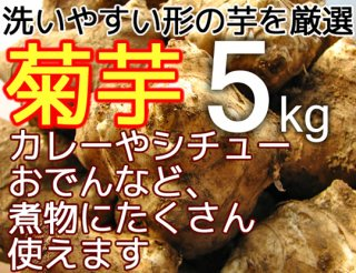 生の菊芋 5kg <神奈川県産>