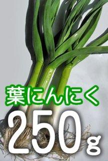 葉にんにく 250g <神奈川県産>