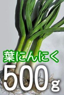 葉にんにく 500g <神奈川県産>