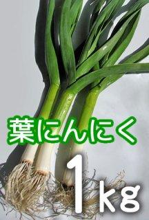 葉にんにく 1kg <神奈川県産>