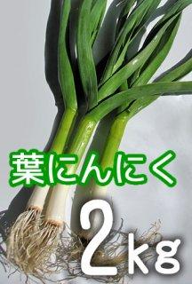 葉にんにく 2kg <神奈川県産>