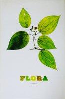 Nick Knight: Flora ニック・ナイト