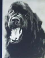 Bruce Weber: Gentle Giants A Book of Newfoundlands ブルース・ウェーバー