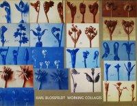 Karl Blossfeldt: Working Collages カール・ブロスフェルト