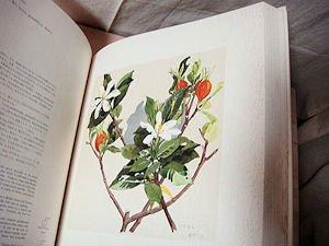 薬用植物画譜/小磯良平画 - 古...