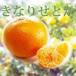 ◆柑橘のいいことどり 豊潤な香り◆木成り!せとか【5kg】 和歌山県産