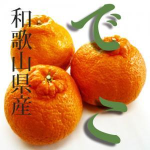 木成り 不知火しらぬひデコ1kg(大小混合) 和歌山県産 甘いっ(^^)