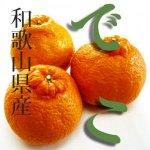 ◆春柑橘の中でとても人気!果汁が多く剥きやすい◆木成り不知火 【5kg】(大小混合)和歌山県産
