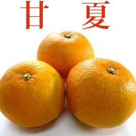 ◆酸味が強めでさっぱり清々しい◆甘夏 【3kg】 和歌山・三重県産