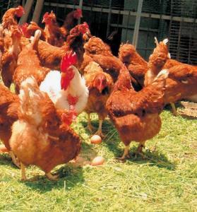 たまご 平飼卵 6個