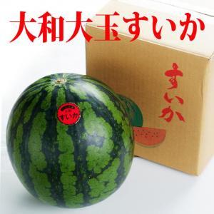 すいか スイカ 大玉大和すいか 赤 6キロ以上 7月26日~箱入り 有機質肥料栽培