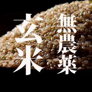 米!無農薬 こしひかり 玄米 5キロ 28年度和歌山県産