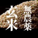 米!無農薬 こしひかり 玄米 5キロ 29年度和歌山県産