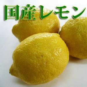 レモン500g 4〜5個 和歌山県産三重県産