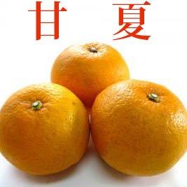 甘夏あまなつみかん5キロ サンフルーツ柑橘 この酸味がたまりません)^^(