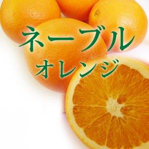 ネーブル オレンジ 1キロ 和歌山県産 柑橘
