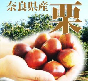 栗 くり 500g 奈良県産