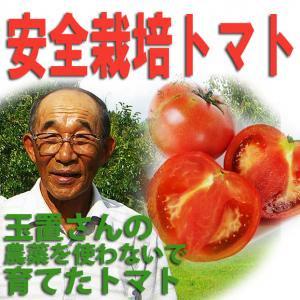 緊急期間限定 たまトマト トマト 4kg 箱入り 7月20日~奈良のこだわり栽培