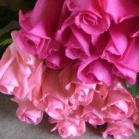 喜寿お祝いバラの花束(ピンク&ピンク)77本
