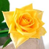 追加用のバラ1本(黄色)
