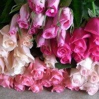 追加用のバラ1本(ピンク・クインテット)