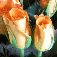 追加用のバラ1本(オレンジ)