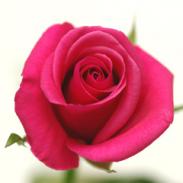 追加用のバラ1本(ピンク)