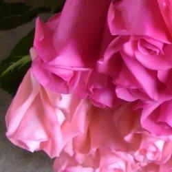 追加用のバラ1本(ピンク&ピンク)