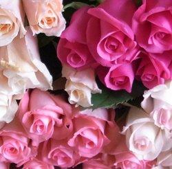 追加用のバラ1本(ピンク・カルテット)