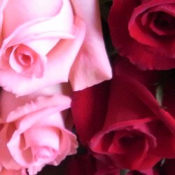 追加用のバラ1本(ローズ・デュオ 赤&ピンク)