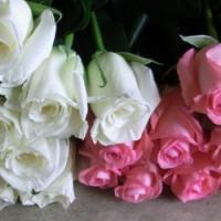 追加用のバラ1本(ローズ・デュオ ピンク&白)