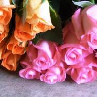 追加用のバラ1本(ローズ・デュオ ピンク&オレンジ)