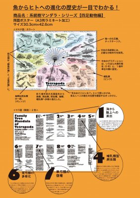 (43/04科学バー)系統樹マンダラポスター【四足動物編】A3ラミネート加工
