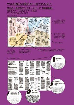 (44/04科学バー)系統樹マンダラポスター 【霊長類編】A3ラミネート加工