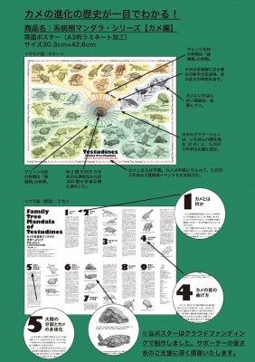 (45/04科学バー)系統樹マンダラポスター 【カメ編】A3ラミネート加工