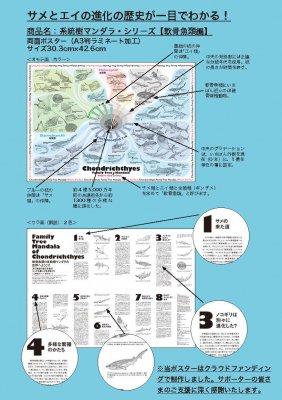 (46/04科学バー)系統樹マンダラポスター 【軟骨魚類編】A3ラミネート加工