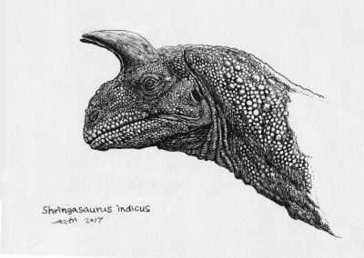 (4/52ほねばたけ へたか)シュリンガサウルス ポストカード